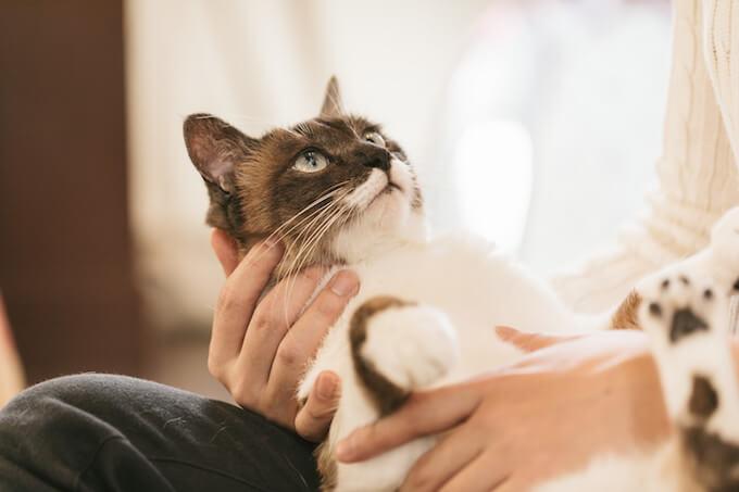 抱えられる猫