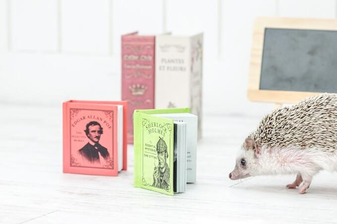 本を読むハリネズミ